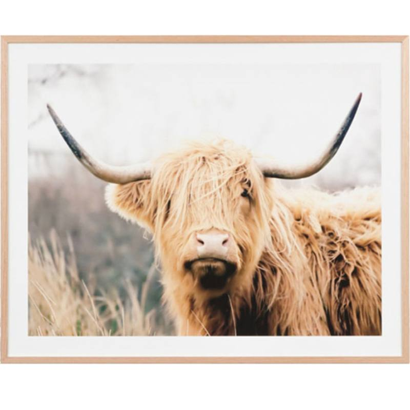 Framed Highland Cattle print